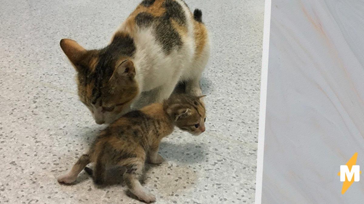 В больницу Стамбула пришли редкие посетители. Кошка сама принесла котёнка врачам, и те не отказали в помощи