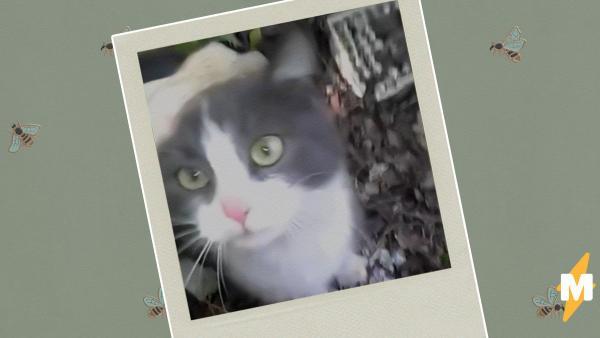 Мужчина спас кошку, а теперь уверен - она умеет говорить спасибо. Иначе объяснить её реакцию он просто не смог