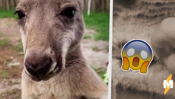 Люди увидели сумку кенгуру изнутри и решили, что вся их жизнь была ложью. Но не стоило верить глазам
