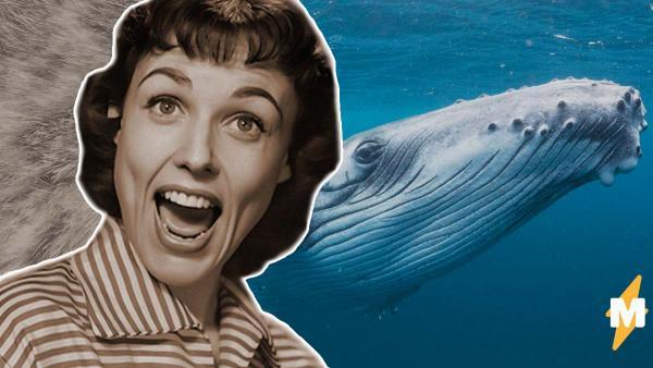 Люди увидели предка кита и влюбились. Кажется, этого шерстяного красавца можно было выгуливать на поводке
