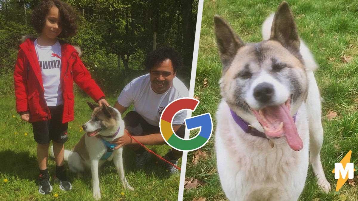 У мужчины украли пса, и он не мог найти его целый год. Правда, искал не там - нужно было сразу зайти в Google