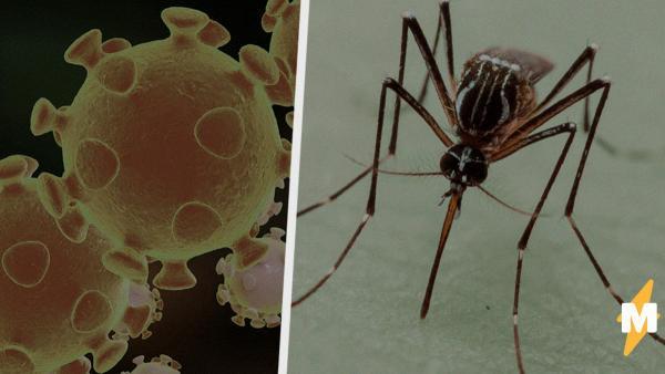 Переносят ли комары COVID-19. Люди в Сети боятся нового способа передачи вируса, и учёным есть что сказать
