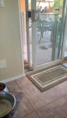 Парень недоумевал, как его черепаха попадает в дом, но помогла камера. С таким интеллектом можно преподавать