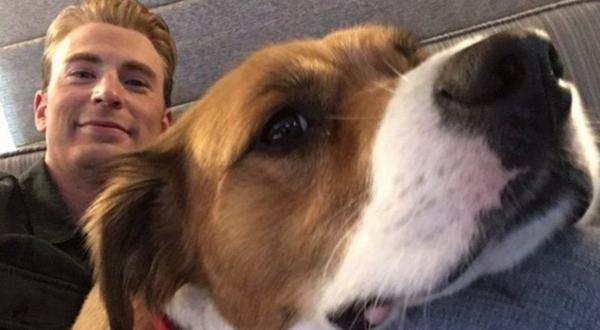 Крис Эванс постриг собаку, и главное теперь - не показывать её псам на районе. Просто грумер из Кэпа так себе