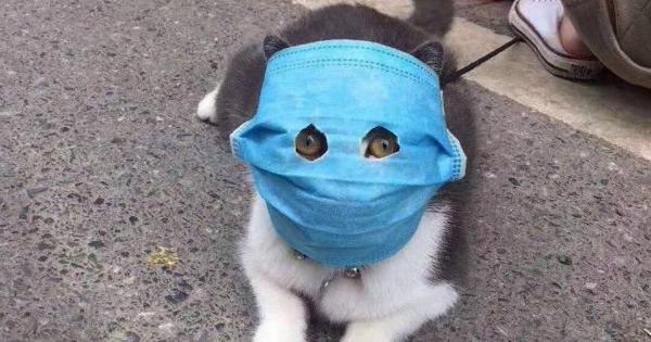 """Коронавирус добрался до российской кошки. Теперь она дома - но селфи в """"Социальный мониторинг"""" не отправляет"""
