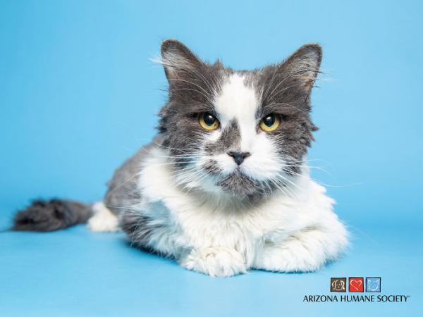 Кот за несколько часов превратился в кошку. И это не магия вне Хогвартса, а чудеса бьюти-трансформации