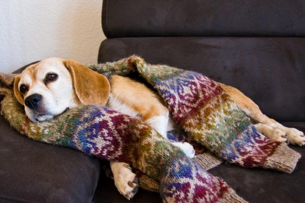 Девушка показала, что делает её пёс, когда никого нет дома. И увиденное нашло отклик у многих собачников