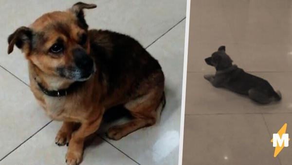 Пёс в Ухане три месяца ждал хозяина у дверей больницы. И люди не знают, как объяснить собаке - друг не придёт