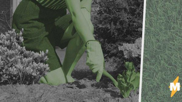 Женщина узнала, чем было растение, которое она выращивала месяцами. Теперь её ждут веселье и, похоже, проблемы