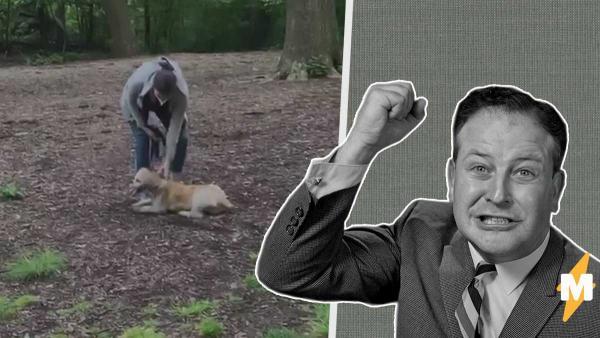 Мужчина поругался с хозяйкой собаки из-за поводка. А абьюз над пушистым и пропаганда расизма лишили её карьеры