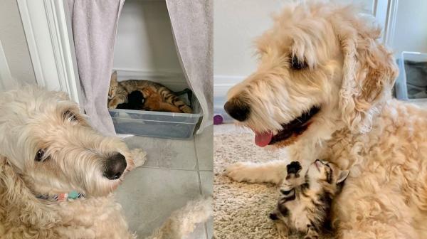 Пара подружилась с уличным котом, и тот преподнёс им сюрпризы. Зверёк оказался кошкой, которая была беременна