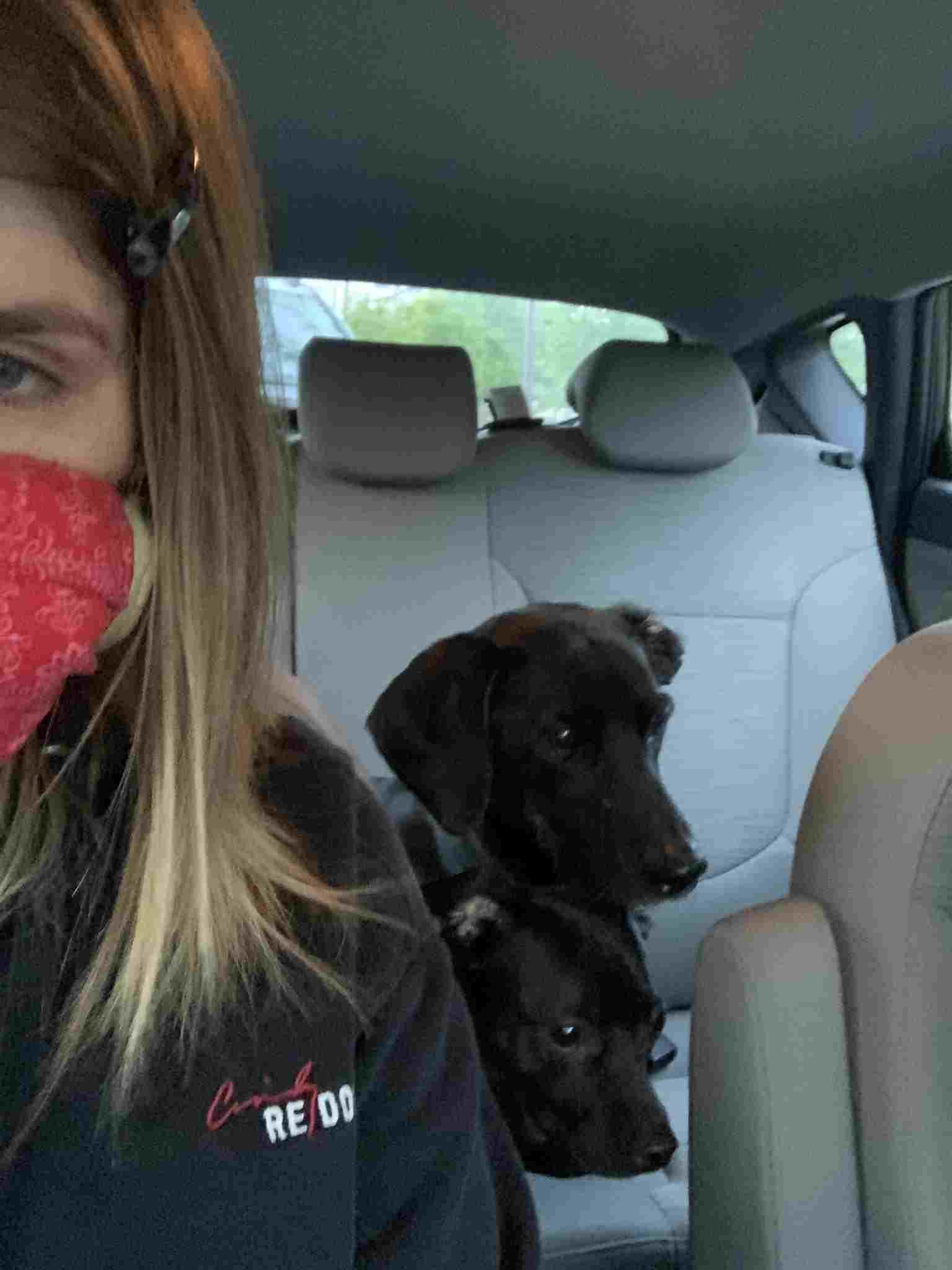 Девушка создала другу аккаунт в FB, а его забанили. Админам нужны водительские права парня, но (упс) он - пёс