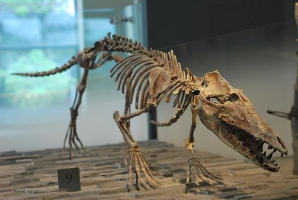 Люди увидели предка кита, и влюбились. Кажется, этого шерстяного красавца можно было выгуливать на поводке