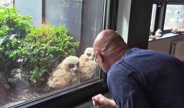 Домосед чувствовал, что за ним наблюдают, и не ошибся. Выглянув в окно, он увидел у рамы восемь глаз