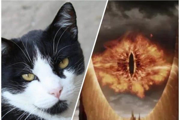 """Парень показал фото кота с разными глазами. И фаны """"Властелина колец"""" уверены - перед ним реинкарнация Саурона"""