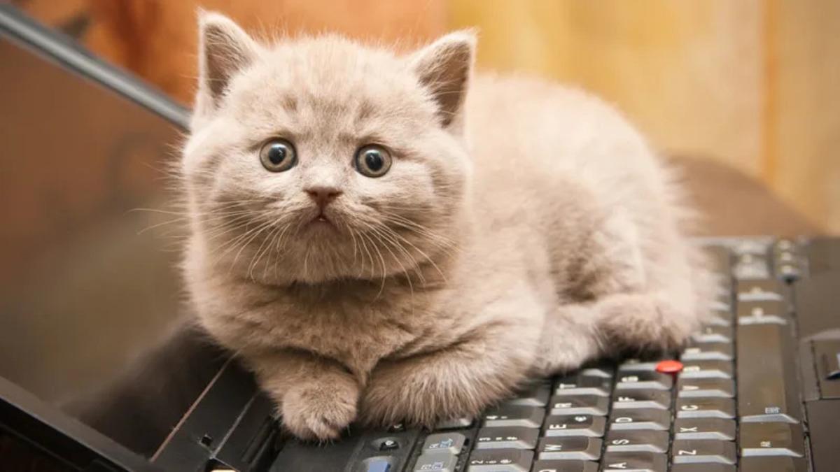 Японец показал, что делать, если кот сидит на клавиатуре. Лайфхак стар, как мир, но по-прежнему удивляет людей