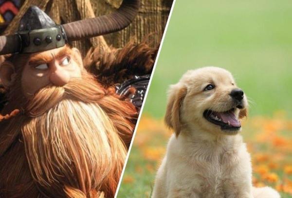 Пёс Макс из США - потомок викингов. Всё дело в его бороде, которой позавидуют даже самые отчаянные хипстеры