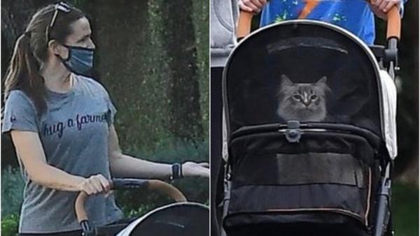 Дженнифер Гарнер выгуляла кошку в коляске. Фаны забыли о Бене Аффлеке и селебе, новая звезда – пушистая киса
