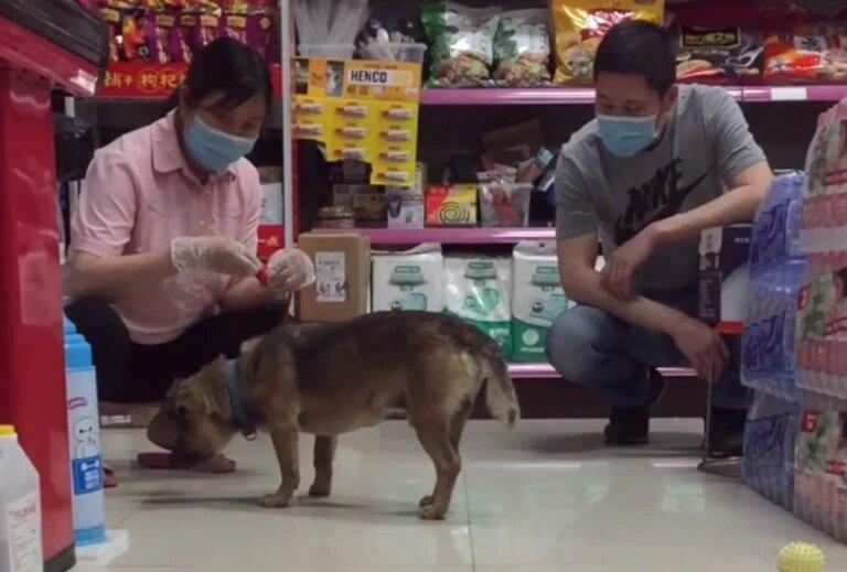 Пёс три месяца ждёт хозяина у дверей больницы. И люди не знают, как объяснить собаке, что её друг умер