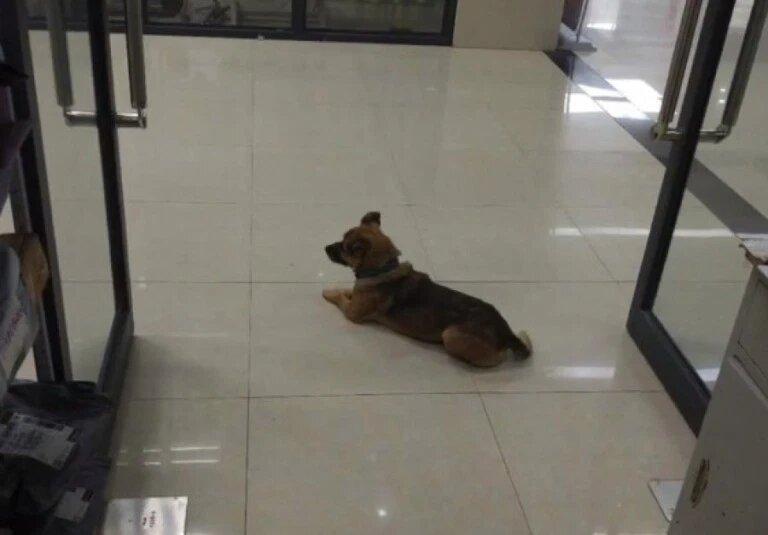 Пёс три месяца ждёт хозяина у дверей больницы. И люди не знают как объяснить собаке что её друг умер