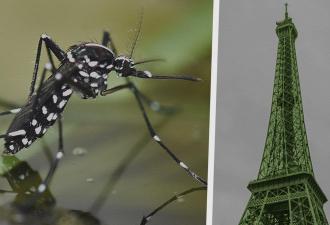 На Францию напали огромные комары, которые в четыре раза больше обычных. Людям страшно, но бежать некуда