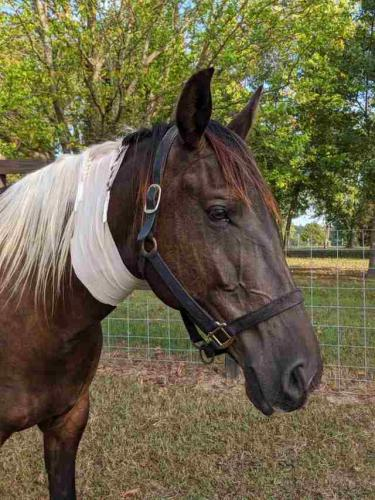Девушка показала свою лошадь зимой и летом, и у людей сорвало крышу. Оказывается, кони -- те ещё хамелеоны