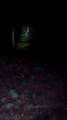 Парень пошёл в ночной лес на криповые вопли и пожалел. Он снял чудовище, которое многие видели на картинках
