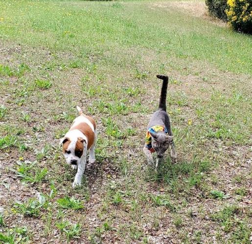 Щенок и кот стали неразлучны в питомнике, но вскоре псу нашли хозяина. И реакция его друга разбивает сердечки