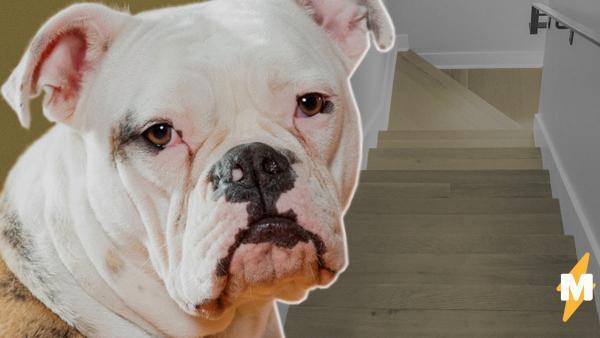 Люди увидели ролик с собакой на лестницей и сломали себе мозг. Никто не может понять: пёс бежит вверх или вниз