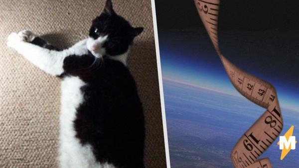 Кот Дансак напугал людей своими размерами - он настоящий гигант. Это не метафора: его видно на Google Earth