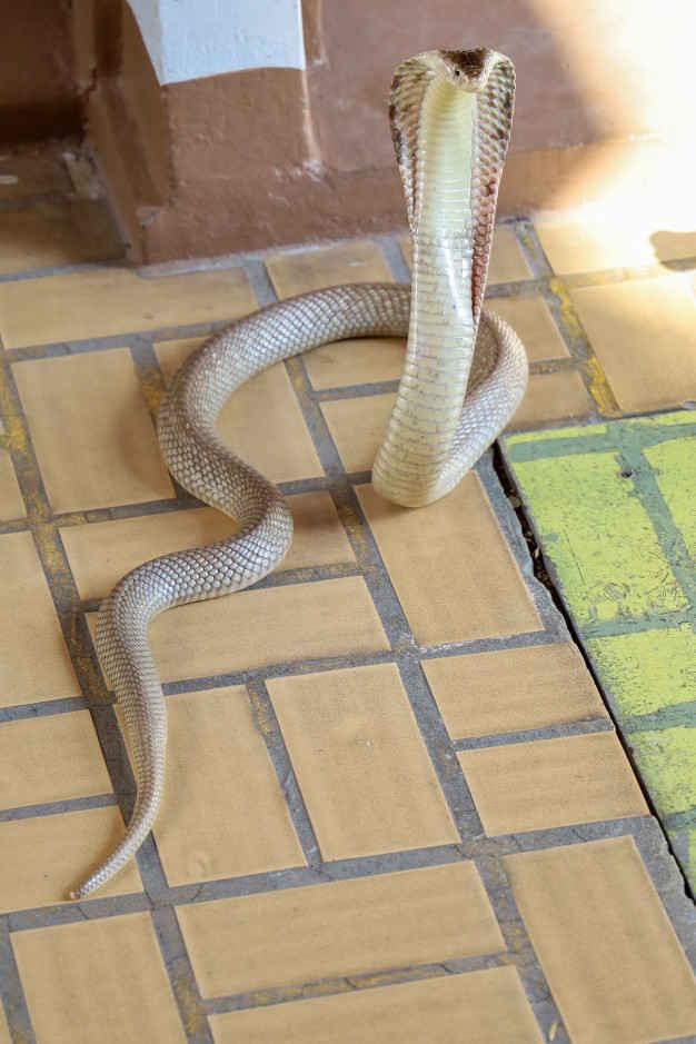 Мужчина не знал, откуда у него дома берутся змеи. Но зря он решил это выяснить - следовало сразу бежать