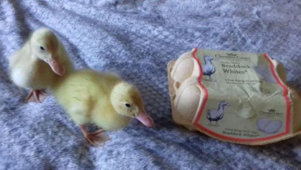 Девушка купила яйца в супермаркете и доказала, что не всё можно есть. Теперь у неё дома на трёх питомцев больш