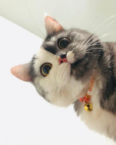 Люди влюбились в кошку по кличке Кошка. Она сочетает в себе сразу двух котиков - всё во внешности