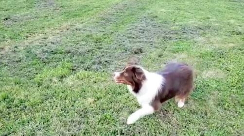 Собаки умеют врать? Парень понаблюдал за своим пёселем и пришёл к выводу: пушистику нельзя верить