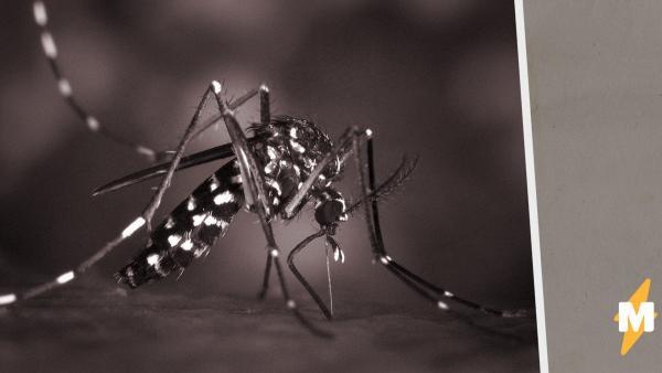 В Великобритании создали миллионную армию комаров-убийц. Но людям она не угрожает, а обещает облегчить жизнь
