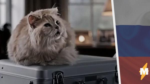 «И ты приходи, котик». Кот Трампа агитирует голосовать за поправки в Конституцию в рекламе на канале «Пятница»