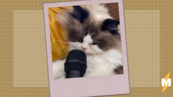 Мужчина поднёс микрофон к спящему коту и открыл миру новый звук. А его звучание удивило даже самого обладателя