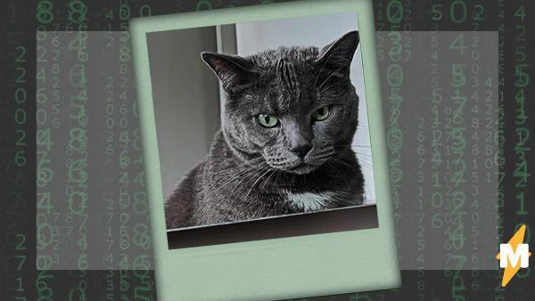 Девушка оставила своего кота во дворе, а когда вернулась - попала в матрицу. На неё глядели питомец и его клон