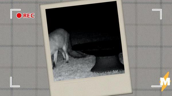 Мужчина увидел запись с камеры в саду и удивился. Он узнал секрет диких зверей, о котором мало кто догадывался