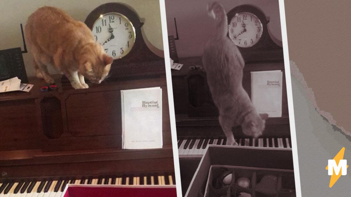 Киса случайно сыграл на пианино и выдал хит. А фаны сравнивают пушистого с Моцартом и предлагают совместку