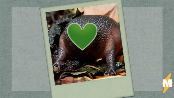Люди нашли самую грустную и милую лягушку на свете. И звук земноводного только увеличивает армию фанов
