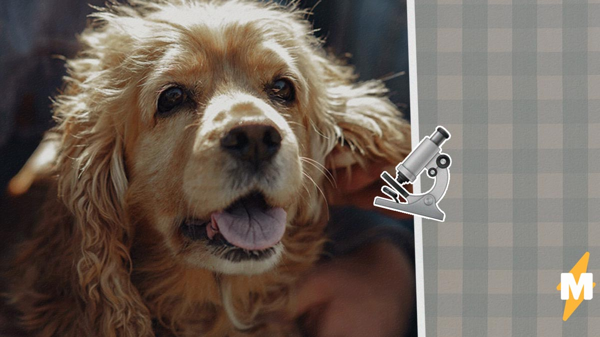 Учёный хотел доказать, что собаки не спасают хозяев, и потерпел фиаско. Псы выручают людей, но не просто так