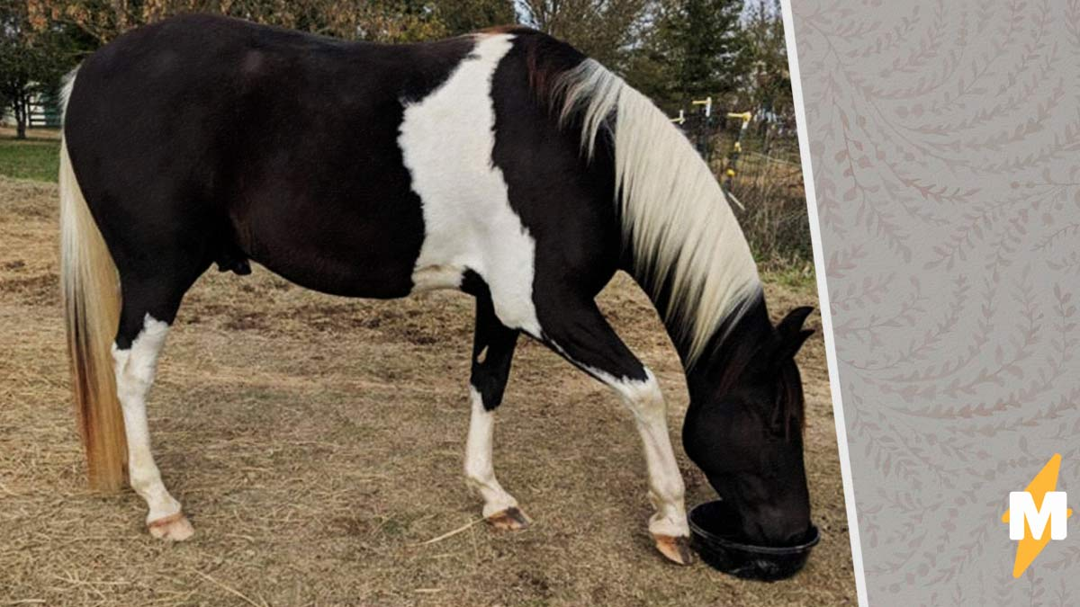 Девушка показала свою лошадь зимой и летом, и у людей сорвало крышу. Оказывается, кони - те ещё хамелеоны