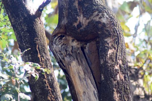 Фотограф искал леопарда, но нашёл кое-кого поинтереснее и хитрее. И теперь его фото может сломать людям глаза