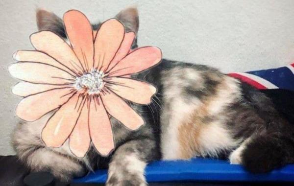 Люди влюбились в кошку по кличке Кошка. Она сочетает в себе сразу двух котиков всё во внешности