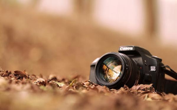 Фотограф искал леопарда, но нашёл кое-кого поинтереснее и хитрее. И фото может сломать людям глаза