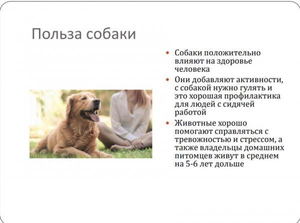 Парень не хотел собаку, но всё поменяла одна презентация. И теперь у него растёт милая пушистая буханка