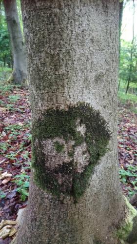Мужчина гулял по лесу и наткнулся на самого Че Гевару. То был на дереве и пытался замаскироваться под женщину