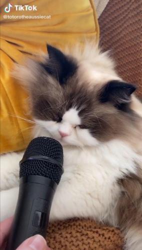Мужчина поднёс микрофон к спящему коту и открыл миру новый звук.