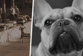 Полиция Украины расследует массовую гибель щенков. Местные авиалинии нарушили все правила их перевозки
